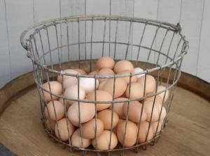 farm eggs do not need refrigeration